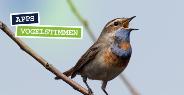 Ein Vogel singt auf einem Zweig.